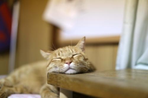 くつろぐ猫